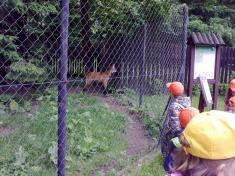 Zoo 54